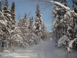 Vinter 5