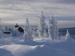 Winter2020.jpg